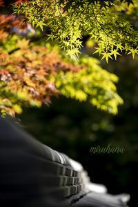 紅葉さんぽ*永観堂 - MIRU'S PHOTO