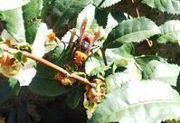 今朝の寒さにスズメバチも大人しくしていました🐜 - 東京徒士組の会