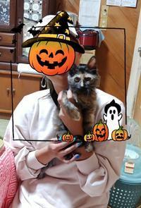 いよいよ明日は合同里親会ฅ(^^ฅ) - 青梅ニャンだふる☆Life