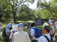 【第7回霞ヶ浦自然観察会「平地に咲く秋の花小池城址を訪ねる」を実施しました。】 - ぴゅあちゃんの部屋