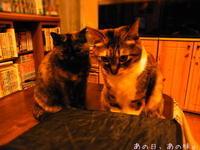 今日の猫らと、お薬保管法。おまけの台所だより。 - あの日、あの味。