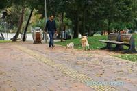 ニャンコと仲良くできない犬 - ねこ旅また旅
