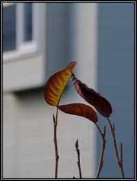 深まる秋 - 好い加減に過ごす2