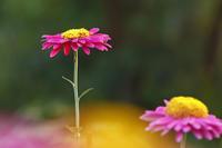 今日の向島百花園西陽 - meの写真はザンス