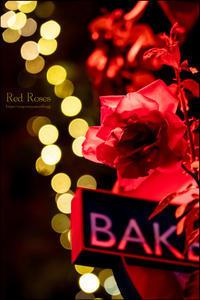 恋は赤い薔薇 - 和む由もがな