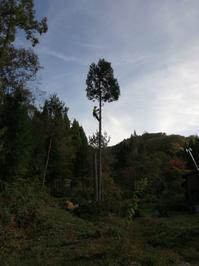拝啓森の花園の守人様 四十二杉の伐採焚火山の整備木の利用 - 向こうの谷に暮らしながら
