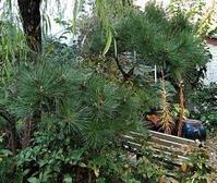 たまには庭のお手入れ - うまこの天袋