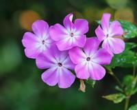ボタニックガーデンで ~遅い秋の花や虫~ - 星の小父さまフォトつづり