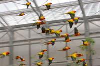 【掛川花鳥園】個性的な鳥たち - TOCHIGI FOUR SEASONS