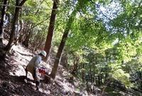今年最初のクヌギを伐る - 大屋地爵士のJAZZYな生活