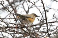 カケス・アカハラほか昨日の研究林で - 今日の鳥さんⅡ