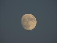Evening Moon - のんびり行こうよ人生!
