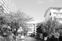 カメラは休日の良き友なり - 相模原・町田エリアの写真サークル「なちゅフォト」ブログ!
