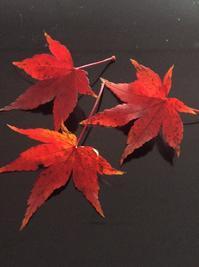 紅葉狩り - ダイアリー