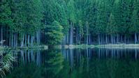 森映す鏡 - Blue Planet Cafe  青い地球を散歩する