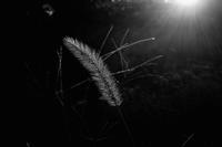 スポットライト - memephoto blog