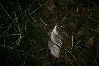 水鳥の落とし物 - フォトな日々