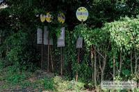 バス停の墓場 - Mark.M.Watanabeの熊本撮影紀行