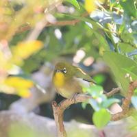 庭の奥 - TACOSの野鳥日記