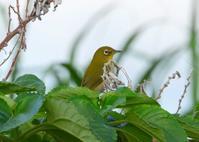 八重山諸島~探鳥~与那国島編 ⑱ - なんでもブログ