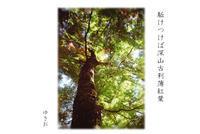 秋惜しむその⑦ - ゆきおのフォト俳句