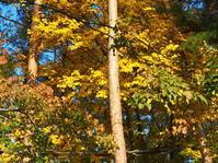 森を深呼吸、小淵沢に行ってきました。 - 家暮らしノート