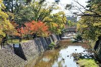 夙川公園の桜紅葉 - たんぶーらんの戯言