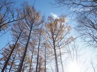 落葉松 - こもれびの森