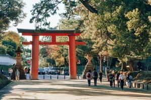 奈良の秋 - 奈良って鹿だけじゃないんです