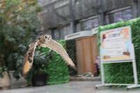 【掛川花鳥園】個性的な鳥たち3バードショー - TOCHIGI FOUR SEASONS
