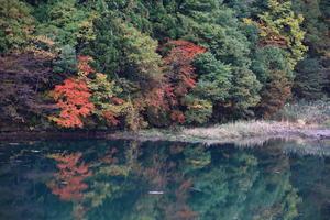 2019.11.4 大源太湖周辺にて ② 6枚 -