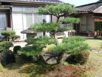 松の剪定 - 家の周りの季節感