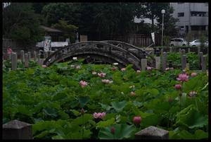 伊賀町周辺 - Nostalgia through a LEICA