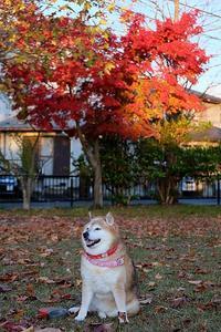 行く秋を惜しむ - 写心食堂