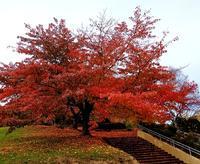 2019年 紅葉 手宮緑化植物園 - 北国の母の日記