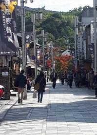 今年の紅葉 - 京都宇治・平等院|はんなりカフェ・京の飴工房 【憩和井】