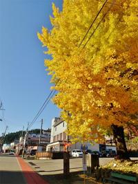 毘沙門通りの周辺はすっかり秋色になりました - 浦佐地域づくり協議会のブログ