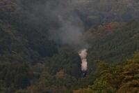 緑の森に光るヘッドライトと湧き上がる煙- 2019年晩秋・山口線 - - ねこの撮った汽車
