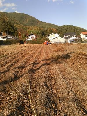大豆と黒豆を収穫 -