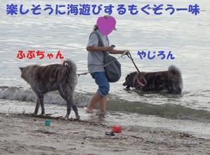 ごきげんタイガ♪ - もももの部屋(超アブナイ秋田犬のタイガ、後足麻痺のバセット・ハウンドのモカ、吠え吠え雑種のベスの共同生活&保護活動の記録です)