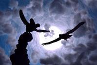 島に住む鳥たち -   木村 弘好の「こんな感じかな~」□□□ □□□□ □□ □ブログ□□□
