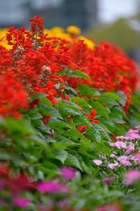 ✔ 秋のお花見=熊本市動植物園 - チャレンジ! 日々の散歩道
