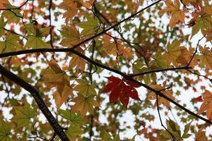 湖畔の秋 - FUNKY'S BLUE SKY