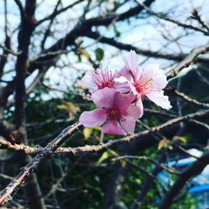 梅の花 - 高知・(有)山陽工務店の仕事