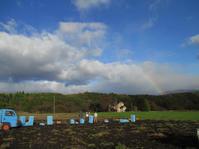 コンニャク畑に虹が出て - 飯沢康輔ブログ Art&Whisky