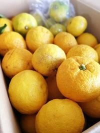 今年もやります「柚子茶ボランティア!」 - 今日も食べようキムチっ子クラブ (料理研究家 結城奈佳の韓国料理教室)