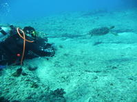 ワイルドに潜る〜糸満近海ガイド付ボートダイビング(ファンダイビング)〜 - 大度海岸(ジョン万ビーチ・大度浜海岸)と糸満でのシュノーケリング・ダイビングなら「海の遊び処 なかゆくい」