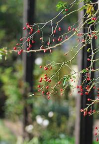 11/13初冬の庭で - 「あなたに似た花。」