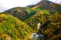 秋色本番 - 長い木の橋