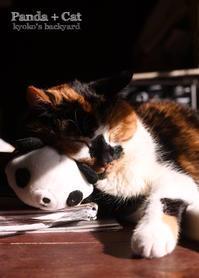 パンダと隊長 - Kyoko's Backyard ~アメリカで田舎暮らし~